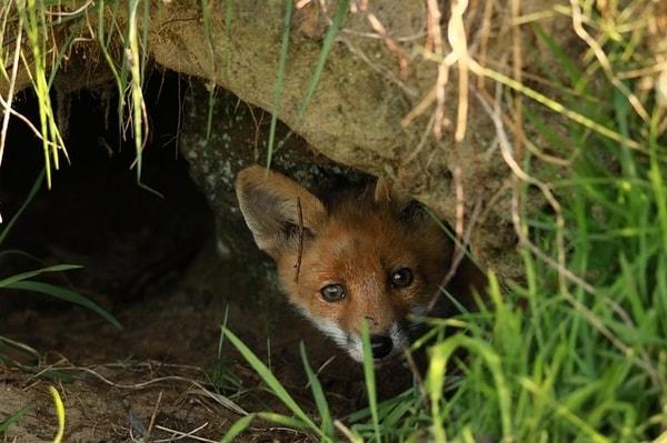 welche-tiere-buddeln-höhlen-im-garten